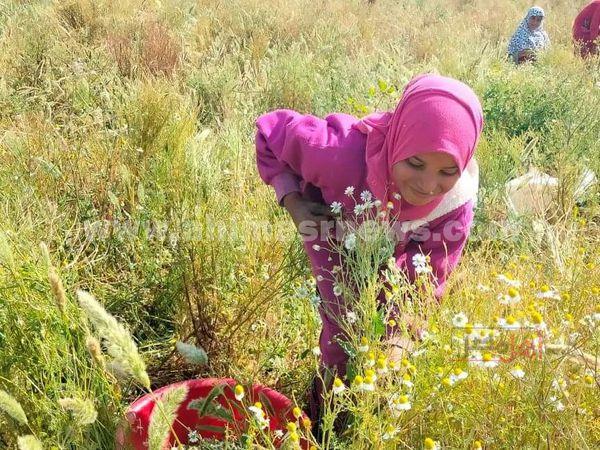 فتيات الفيوم زهور الحقول...