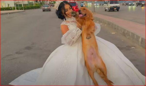 هبه مبروك تتزوج من كلب 2