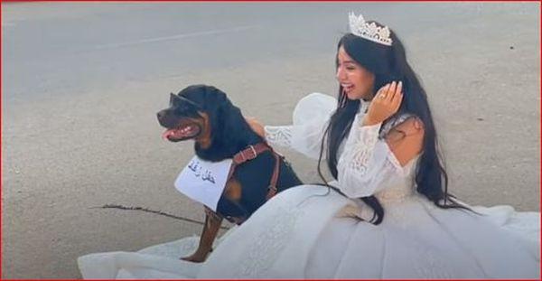 هبه مبروك تتزوج من كلب 5