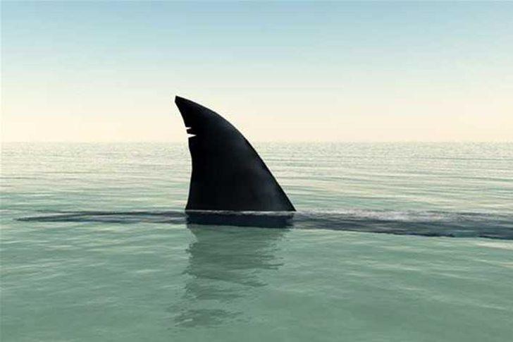 زعانف القرش
