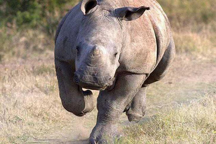 صورة تعرض مصورها لغضب وحيد القرن