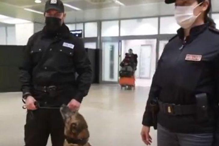 إيطاليا تدفع بكلاب مدربة لرصد مصابي كورونا