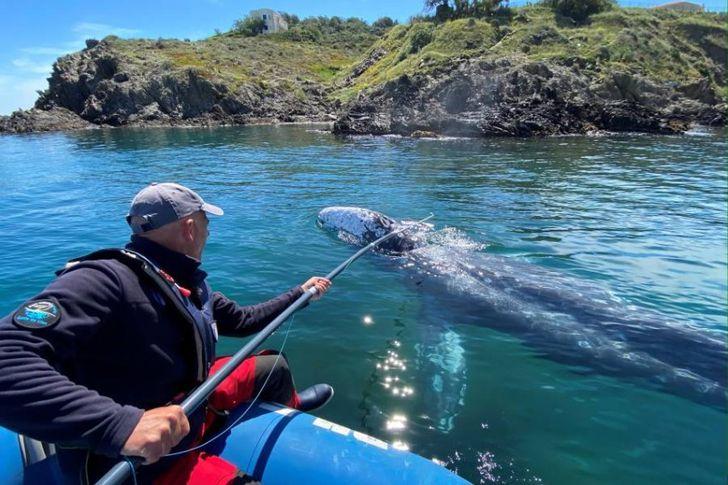 الحوت التائه في البحر المتوسط