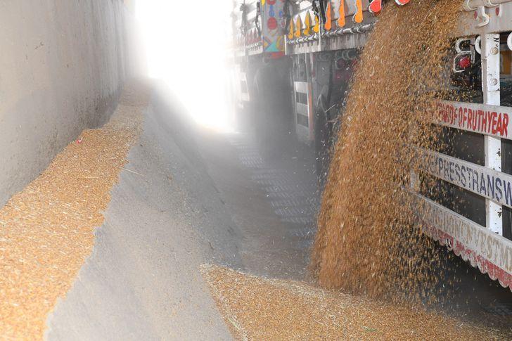 رفض استلام ألفين طن من محصول القمح بصوامع قنا