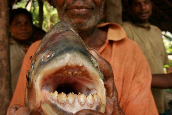 علماء يحذرون السباحين من سمكة ألبيرانا