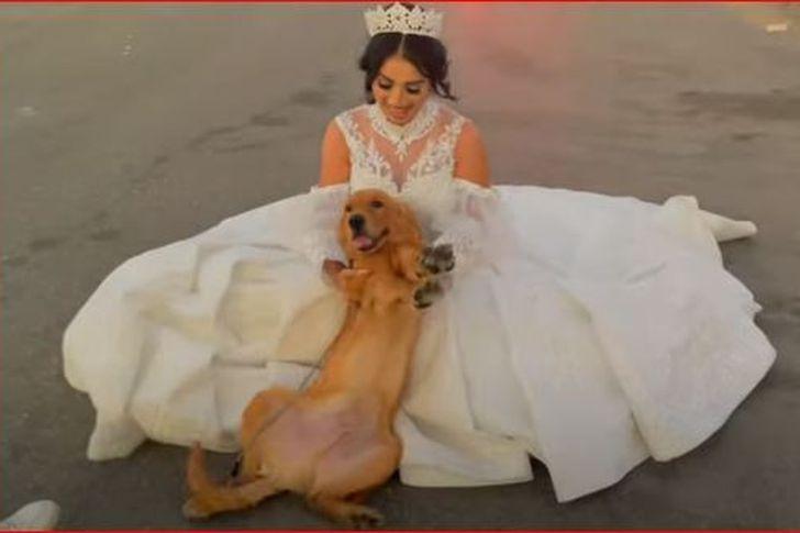 هبة مبروك تتزوج من كلب