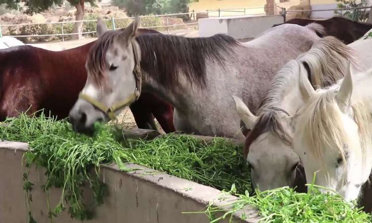 أنقذوا محطة الزهراء للخيول