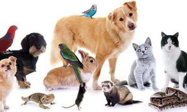 حيوانات تنقل العدوى