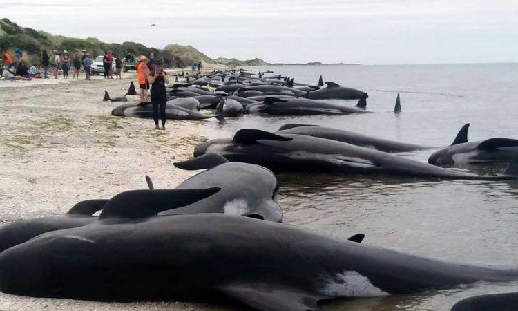 جنوح الحيتان