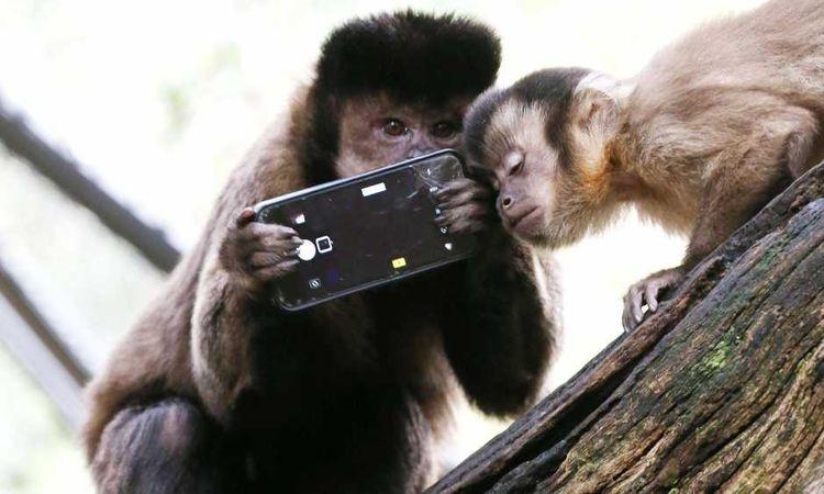 قرد يسرق هاتف ذكي
