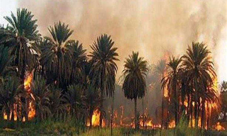 حريق أشجار نخيل- صورة أرشيفية