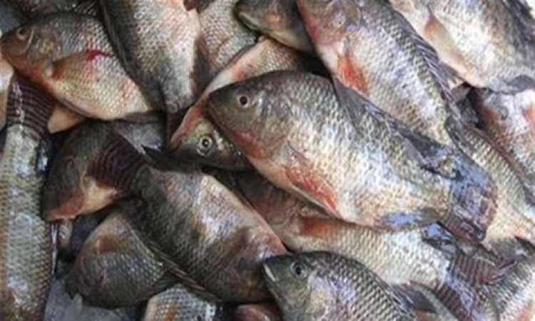 سمك- صوره ارشيفية